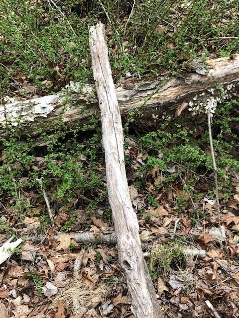 log cross